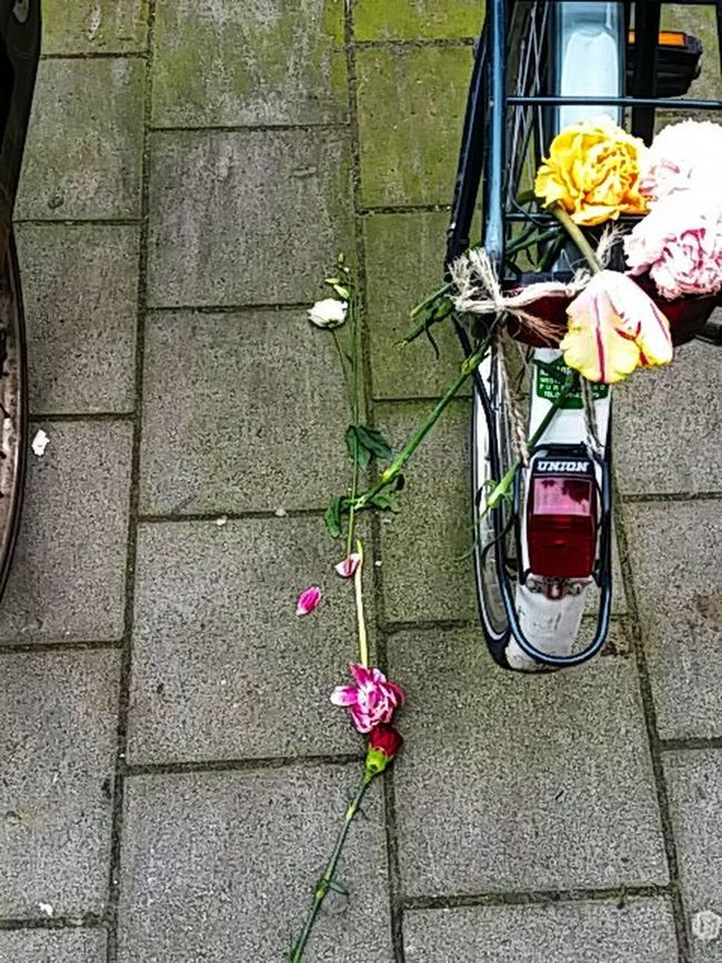 I once had a girl, or should I say she once had me... Taking Pictures Photography Fotografie Street Photography Fotofantast Flower Streetphotography Everything Is Not Lost Takingphotos Anything Can Happen Amsterdam
