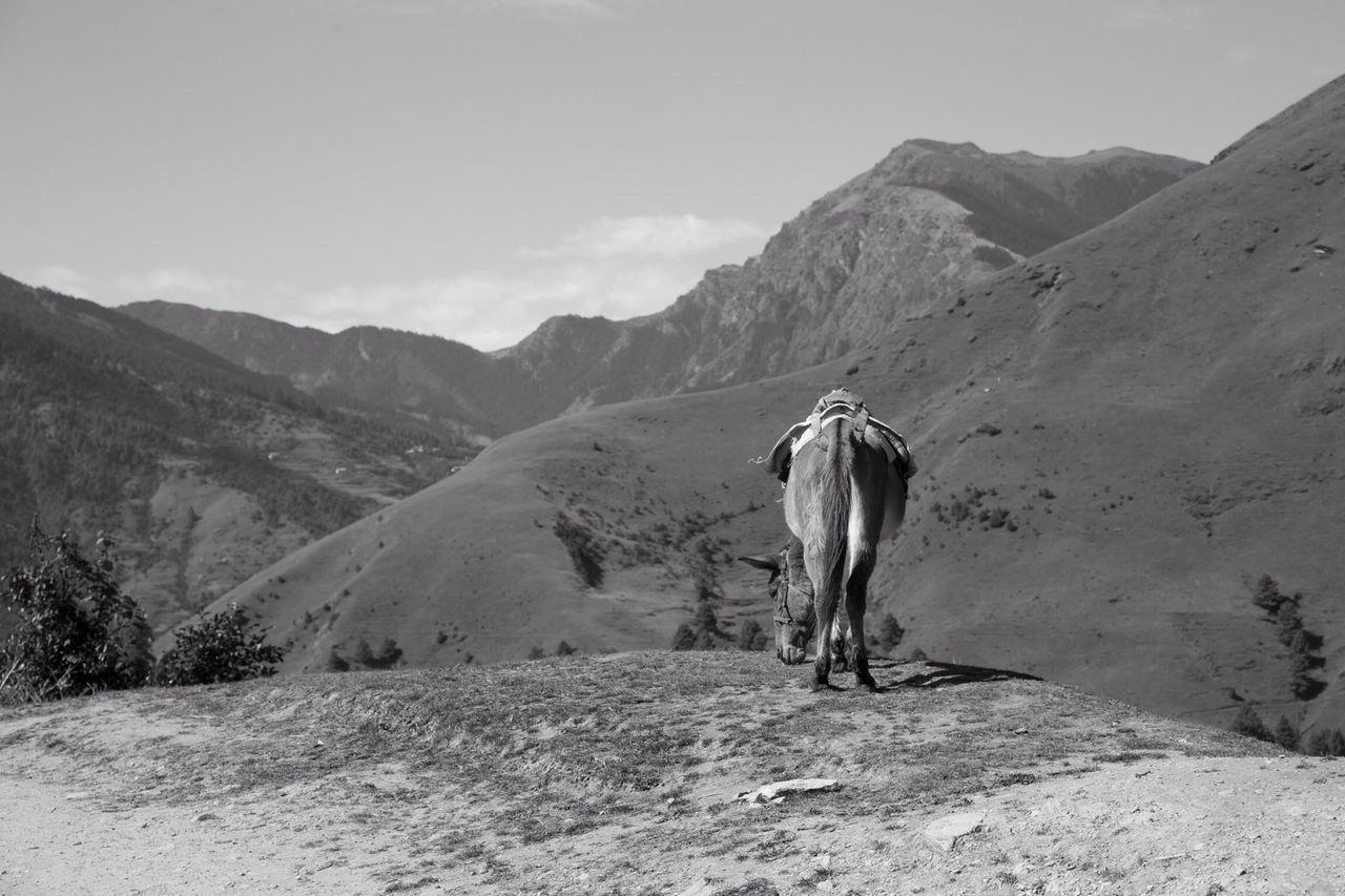 Beautiful stock photos of schwarz weiß, Animal Themes, Arid, Arid Climate, Day