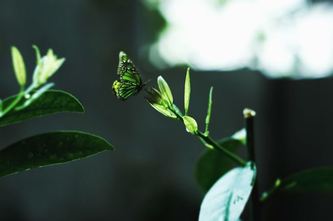 Nikon Nikonphotography D3200 Garden Butterfly Green Plant Gardner Insect Photography After Rain Morning