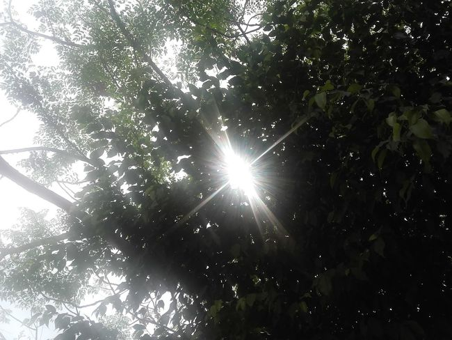 Sunshines Sunshining Daylight March Showcase Naturelovers Nature Photography Nature_collection Sunny Day Tree And Sun