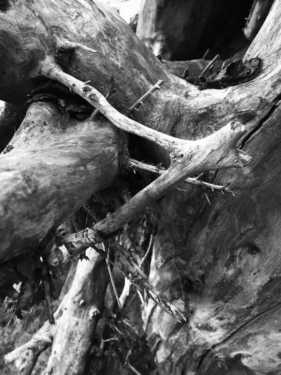Abstract Nature Tree Trunk Close-up Tree Nature Outdoors Backgrounds Dead Tree Wood - Material Abstract Natural Collages Beauty In Nature Shapes And Forms Driftwood Oddities Shapes In Nature  Natural Condition Layers And Textures Abstractions Black And White Knotted Wood Black & White Weathered