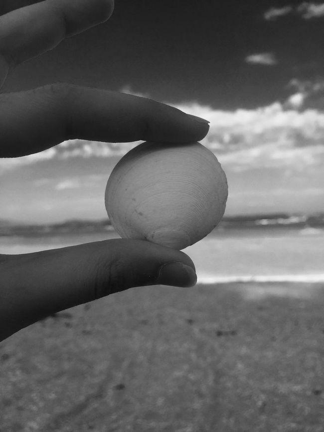 Shell Arousa  Beach Blackandwhite