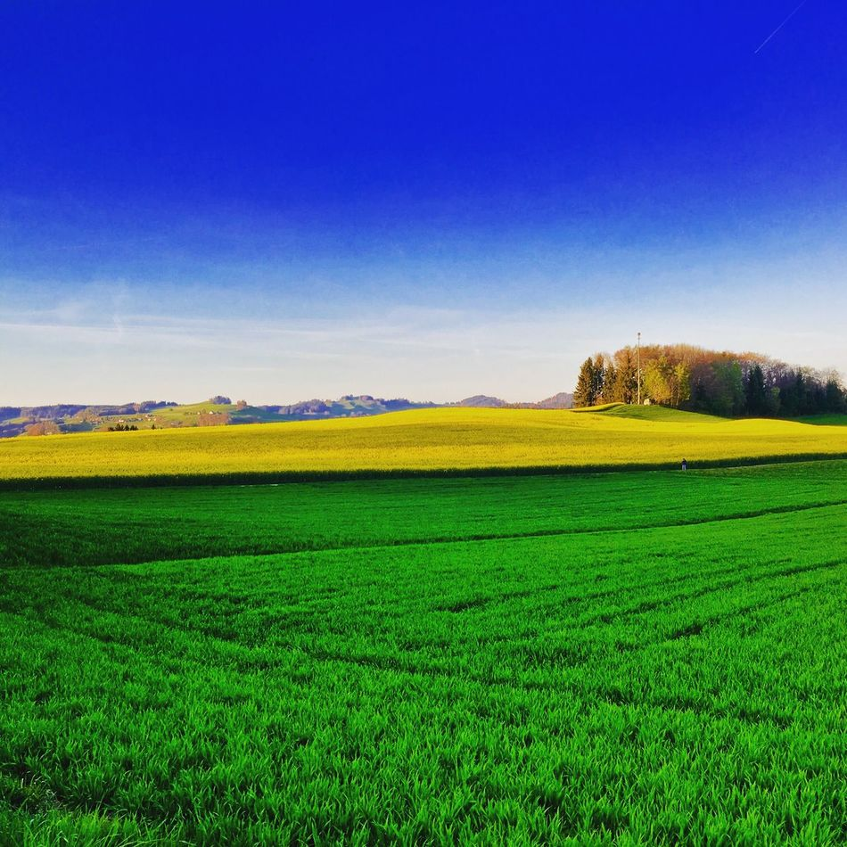 Agriculture Field Nature Landscape Blue Yellow Green Spring 91 EyEmNewHere Switzerland
