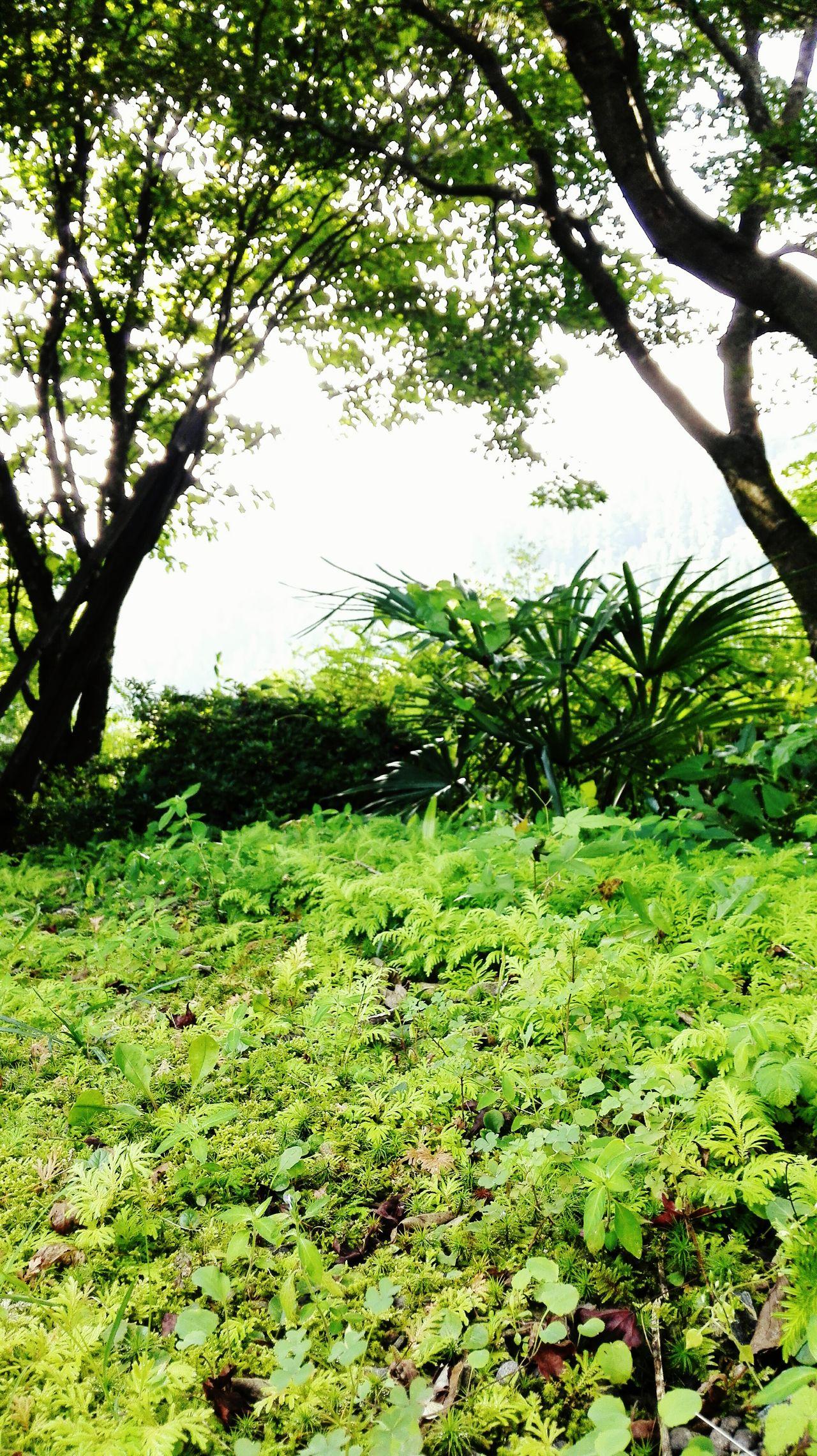 In My Yard Green Green Green!  Taking Photos Taking Photos Enjoying Life Oita,japan Secondhome