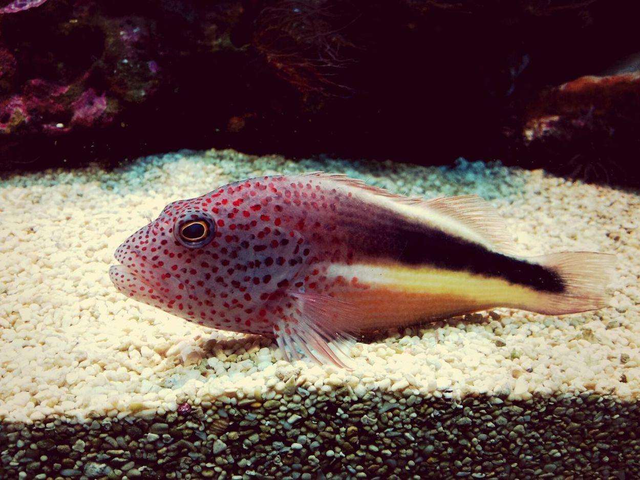 Sea Fish Underwater Nature