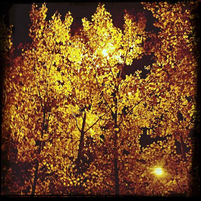 Осень 🍁🍂 First Eyeem Photo
