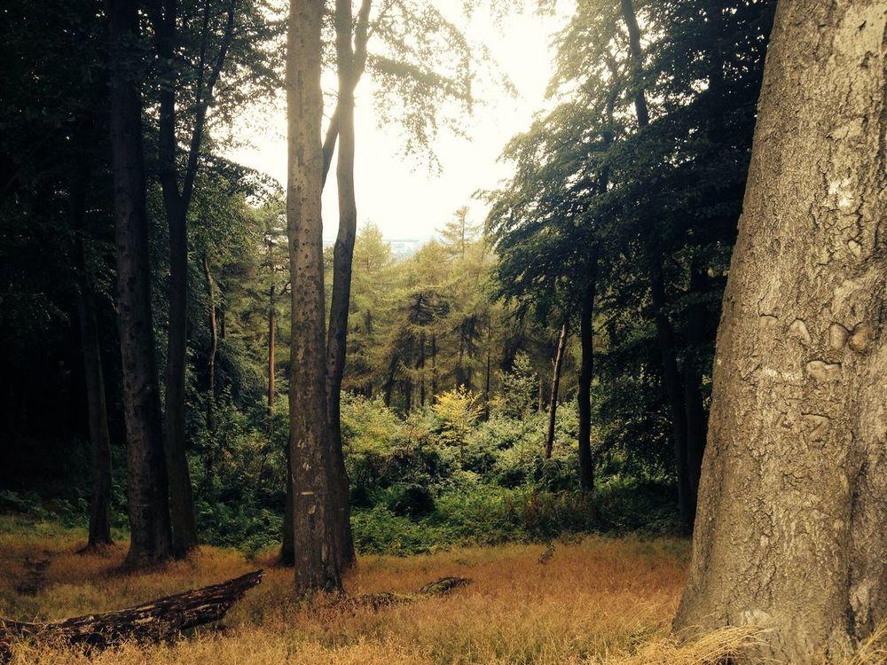 Nice Views Walking Enjoying The Sights Hugging A Tree