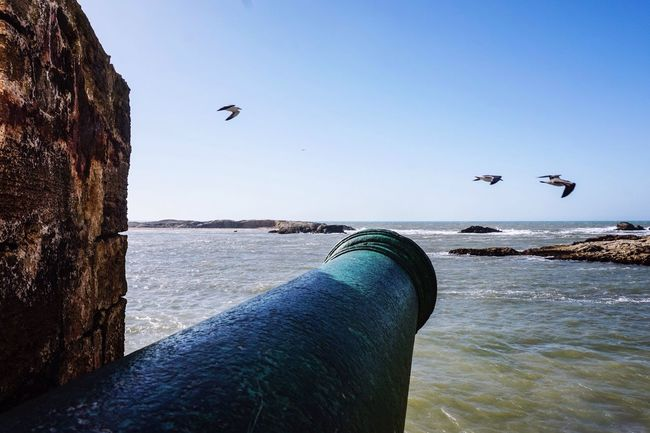 Cannon Fort Seα Gull Traveling Essaouira Morocco Travel