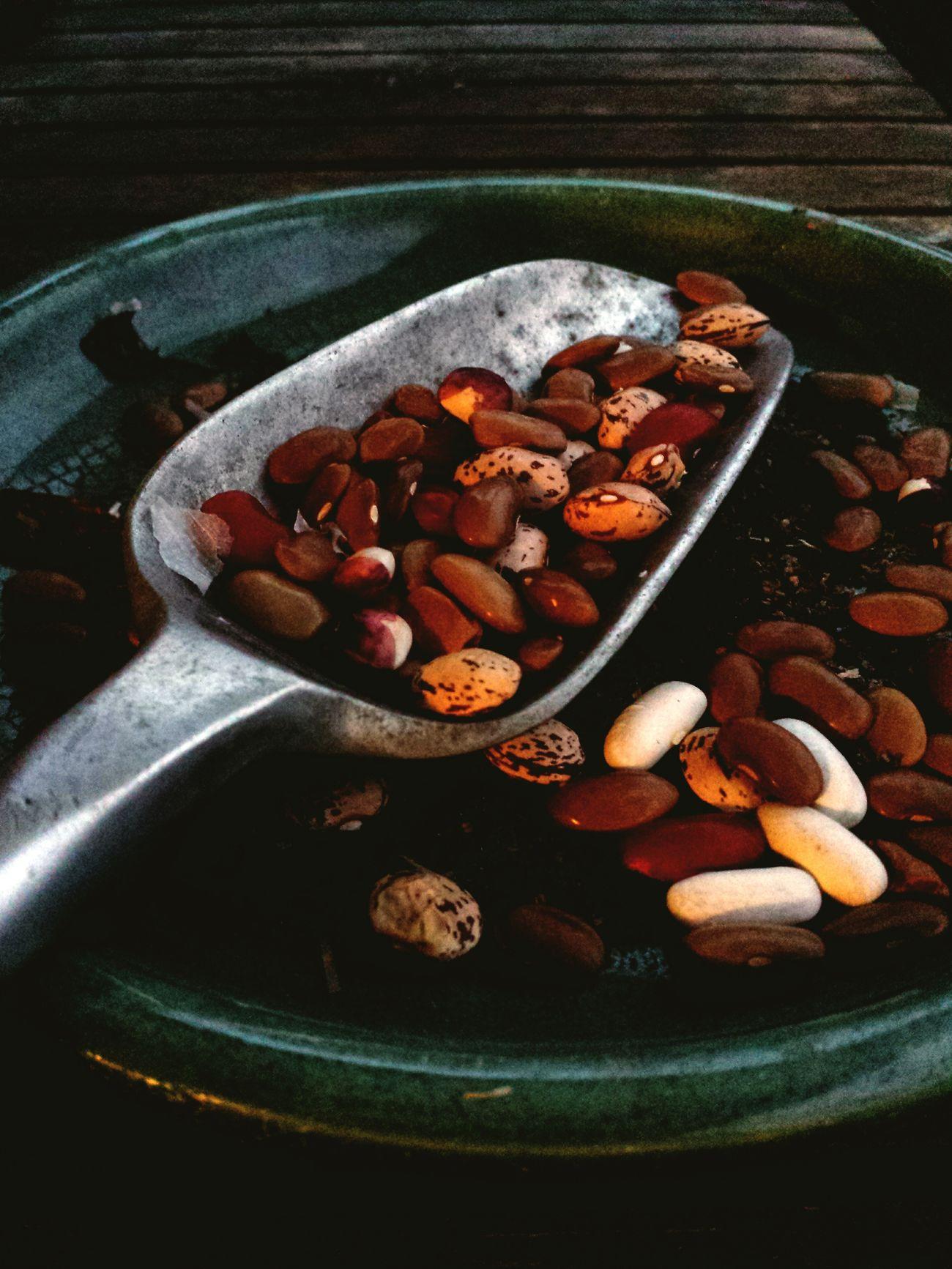 Dusk gardening in spring Spring Beans Planting Seeds