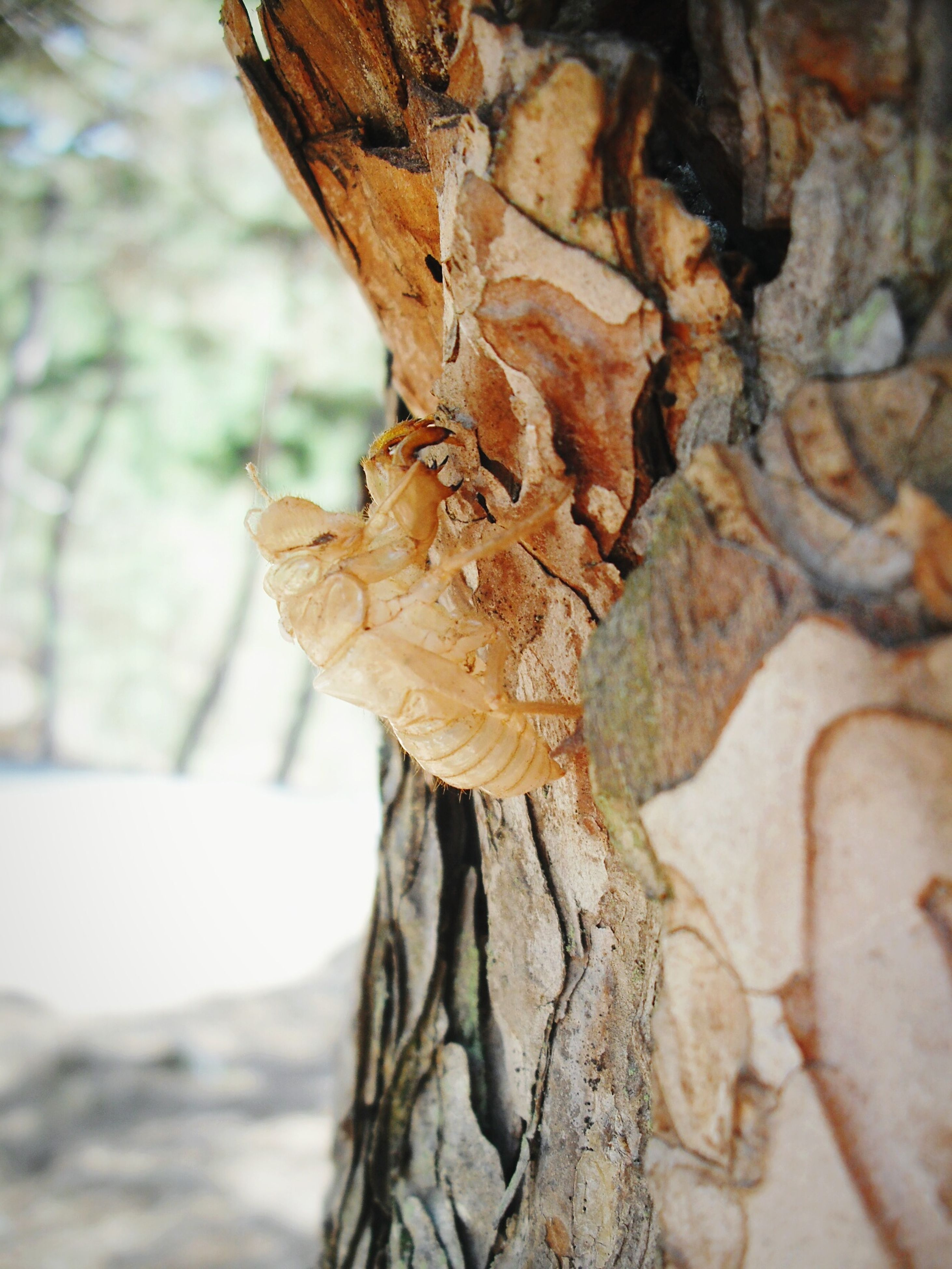 focus on foreground, close-up, tree trunk, tree, wood - material, dry, textured, bark, brown, nature, selective focus, part of, day, natural pattern, outdoors, branch, leaf, rough, wood, no people