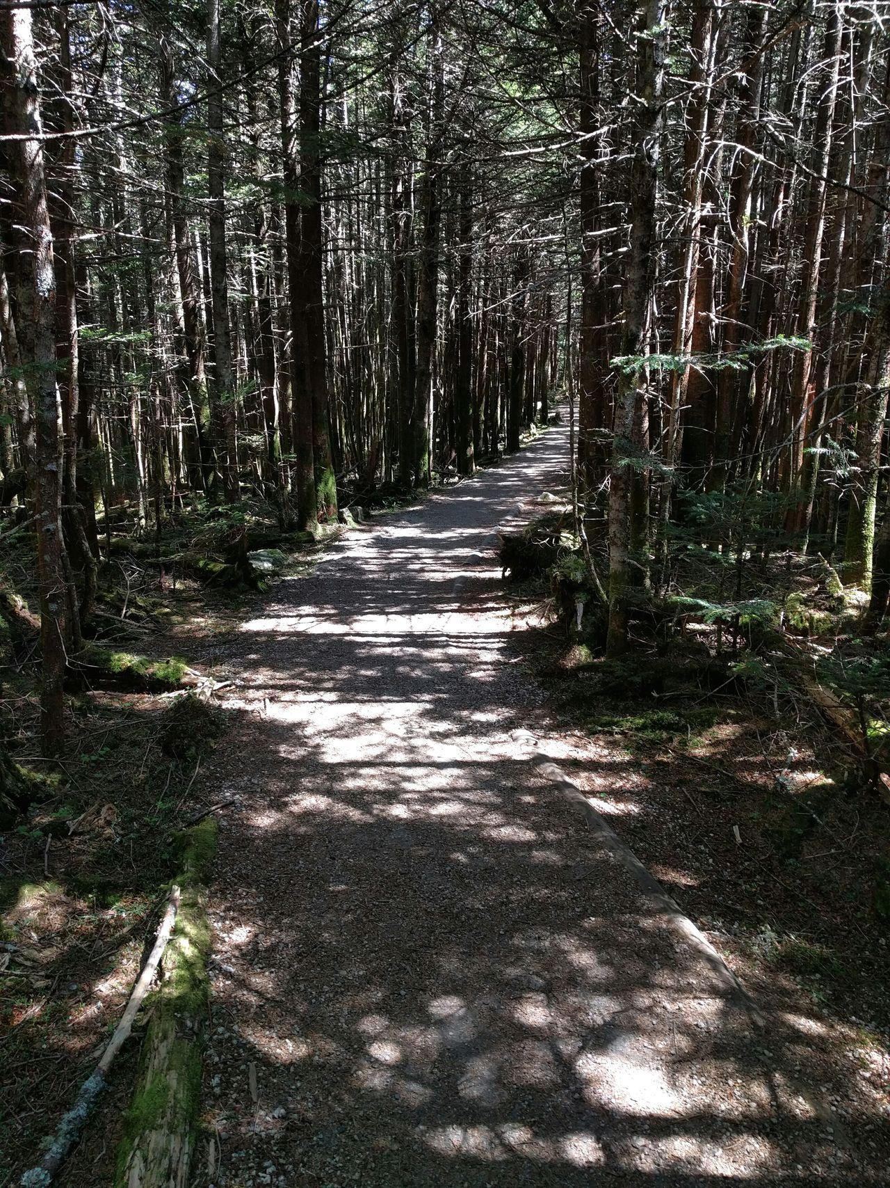 Mount Mitchell Hiking Outdoors Hiking Path