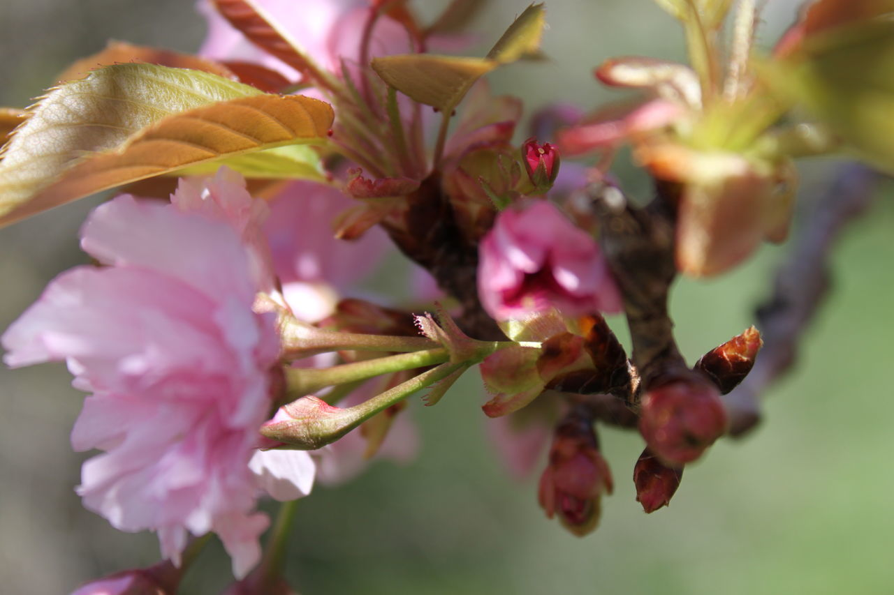 Spring Flower Pink Flowers Flower Head Flower Petal