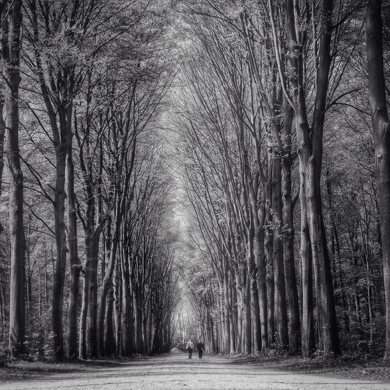 Blackandwhite Nature Trees