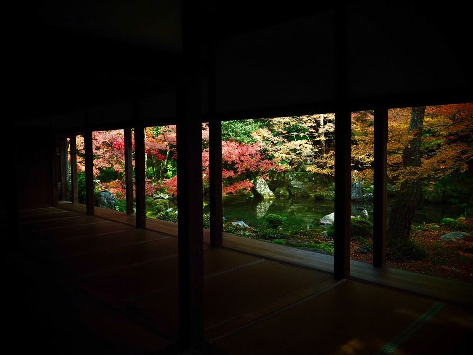 Kyoto Japan ASIA Yase Rengeji Temple Courtyard  Garden Beauty In Nature Tree Architecture Day Growth Leaf Autumn Olympus PEN-F