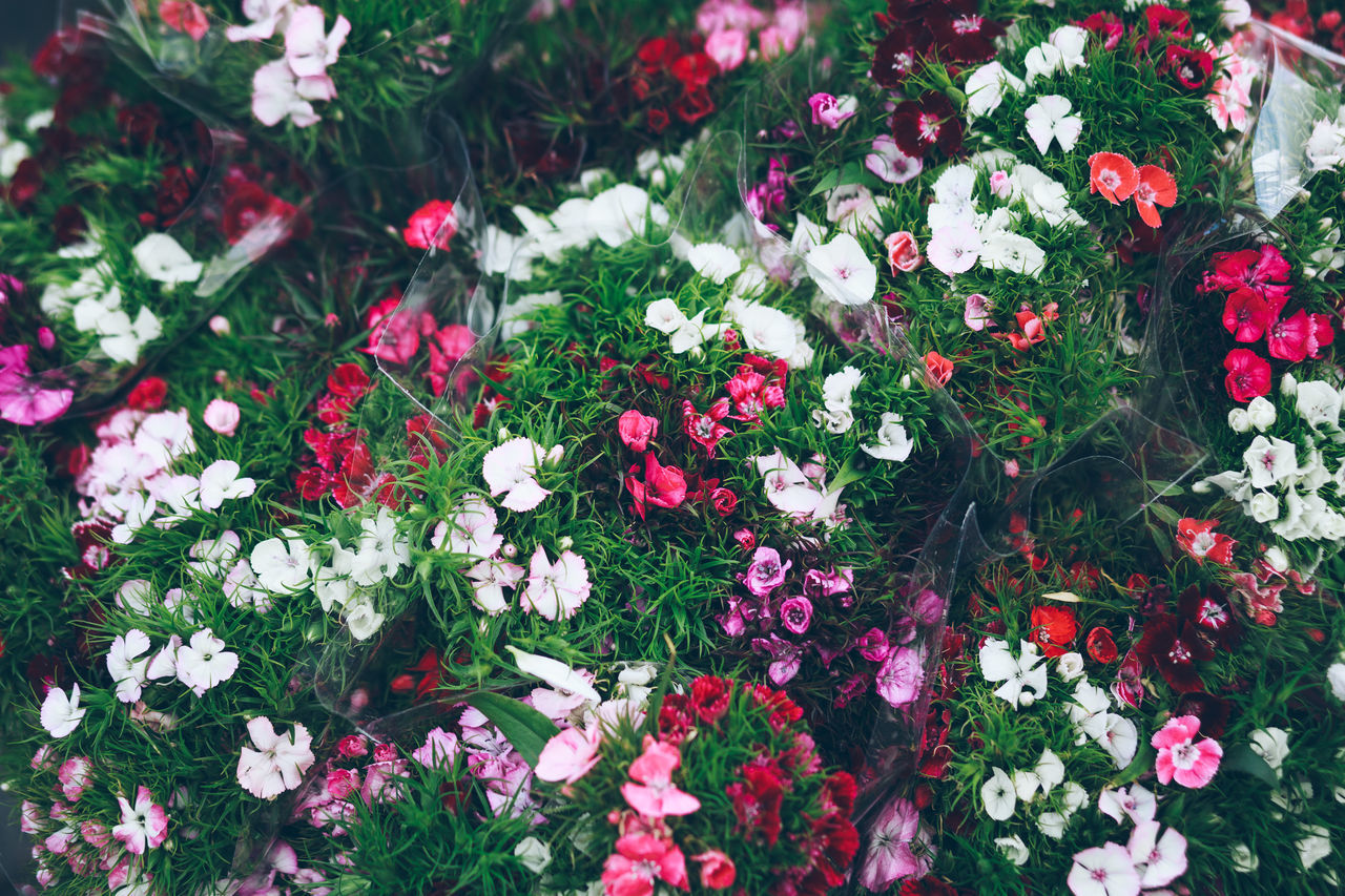 Backgrounds Beauty In Nature Close-up Day Flower Flower Head Fragility Freshness Full Frame Growth Multi Colored Nature No People Outdoors Petal Petunia Plant Rhododendron