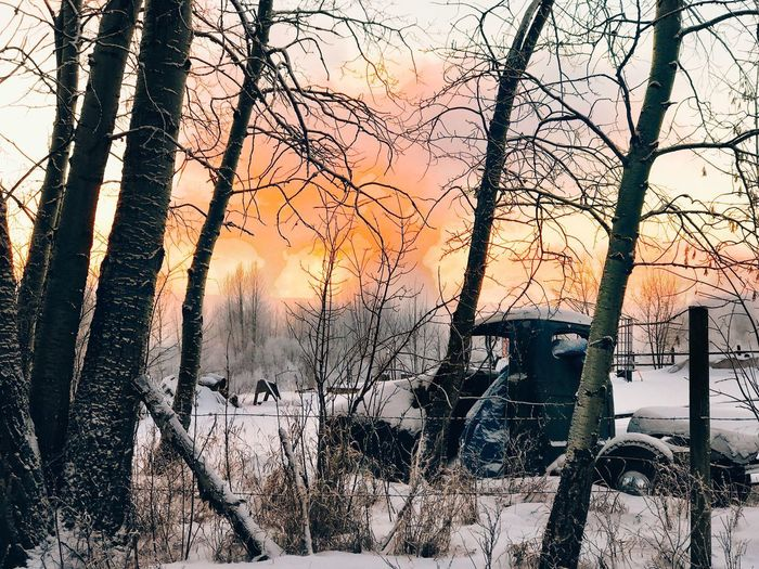 Left in the field Winter Winter Wonderland Oldvehicle Vehicle Breakdown Wreck Bare Tree Winter Cold Temperature Tree Snow Nature Branch Tree Trunk Beauty In Nature Sunset Sky Outdoors