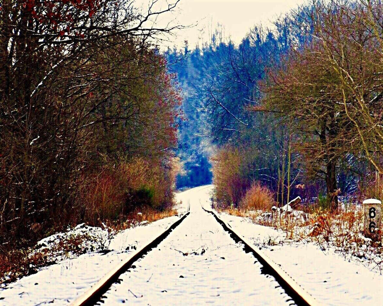 Trainstation Snow Cold Temperature Tree Winter Nature Beauty In Nature Scenics The Way Forward Outdoors Forest Day Landscape No People Snowing Sky EyeEm Nature Lover EyeEm Traveling EyeEm Best Shots EyeEm Nature Collection Eyem Nature Lover Transportation