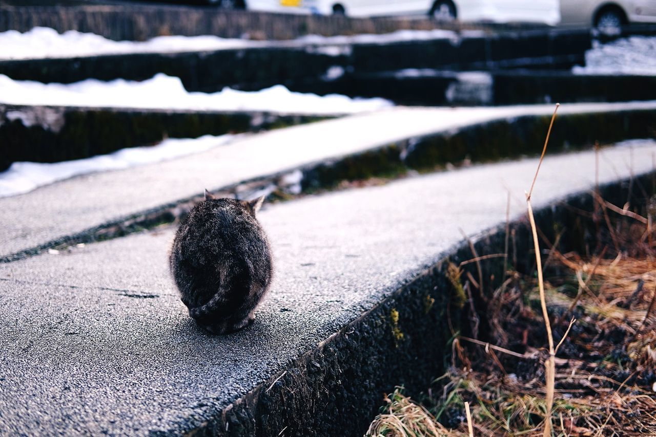 Ev'rybody wants to be a cat Focus On Foreground Sunlight Day Outdoors No People Nature Close-up Cat Cold Snow たまたま聴いてた曲名