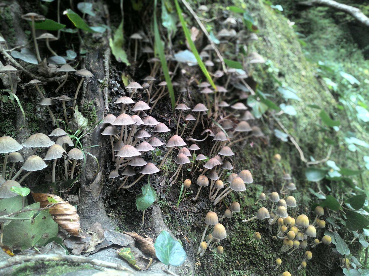 Mantar  Mushrooms Smurfs şirinler:)))) Bursa / Turkey Nature Suuçtu Şelalesi 2015