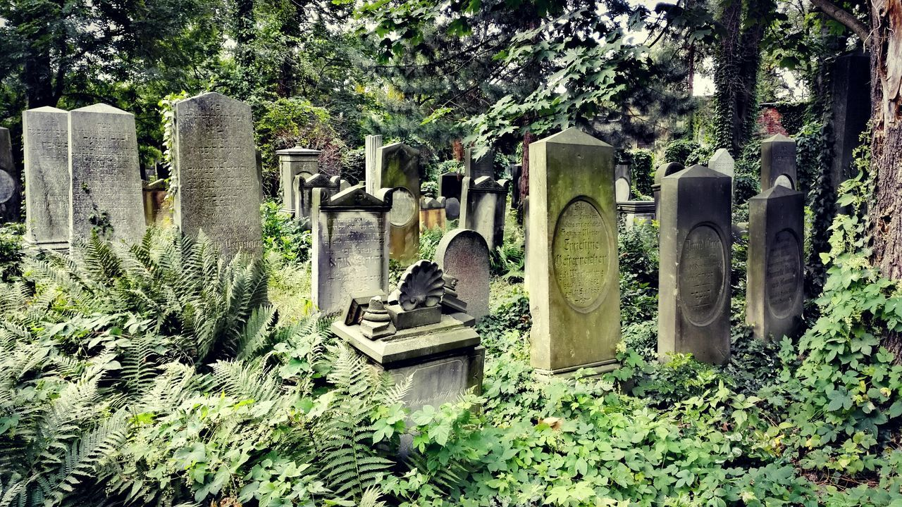 Rest In Peace Park Cemetery Graveyard Beauty Graveyard Gravestone Time Outdoor Photography Cityscapes City Life Remote Old Antique EyeEm Best Shots EyeEmBestPics Eye4photography  Wroclaw Breslau Colour Of Life The Street Photographer - 2017 EyeEm Awards