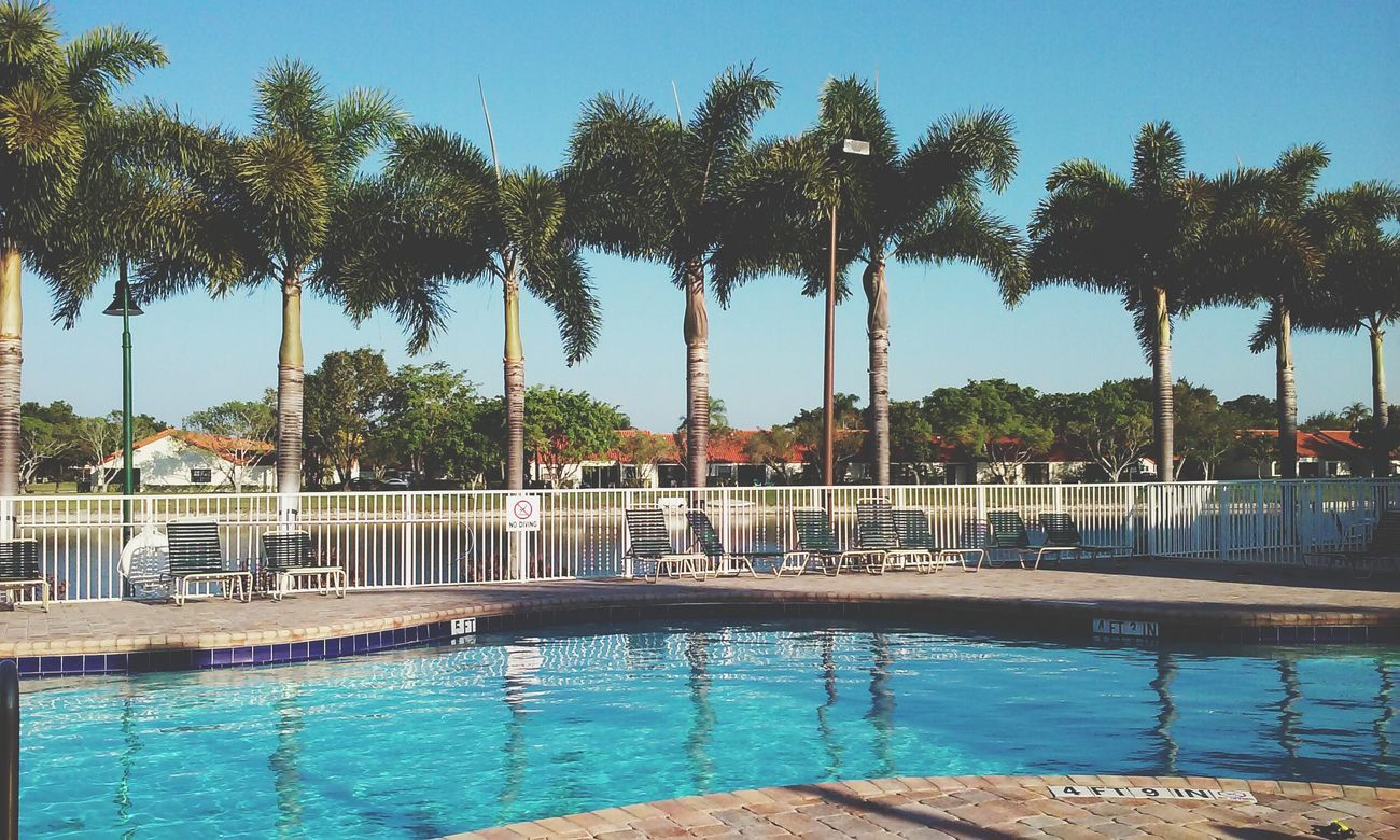 🌴🏊 Swimming Pool Palm Trees Pool Time Ready For Summer Florida Pool Spring Break Phoneography