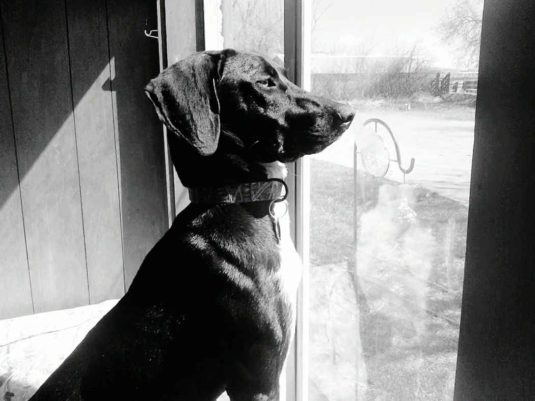 Mia Pointerdog Dogs Bird Dogs Security Mans Best Friend Blackandwhite Photography Companion Dog Loss Of A Companion Loyalty Is Everything