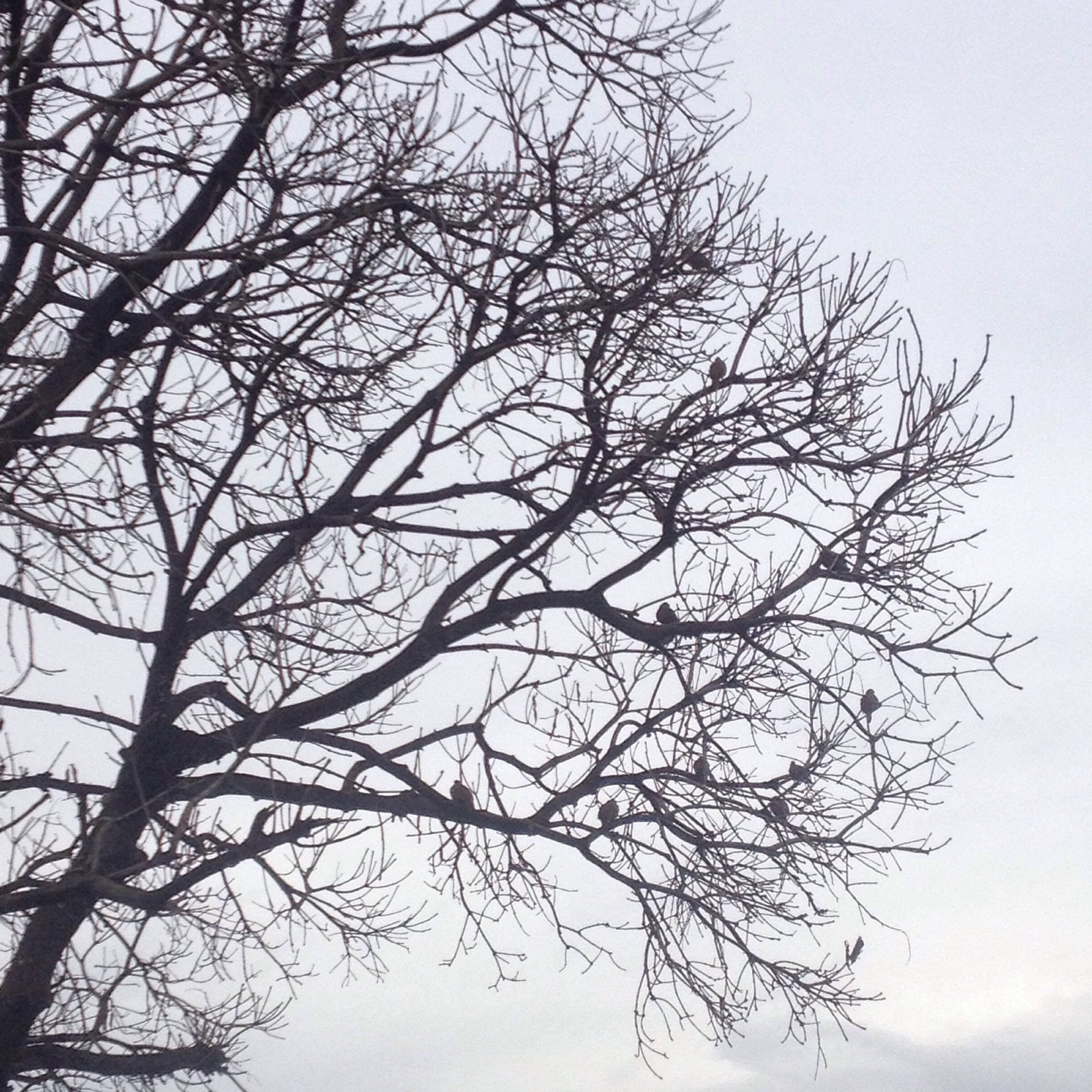 bare tree, branch, tree, low angle view, tranquility, clear sky, nature, sky, beauty in nature, scenics, outdoors, tranquil scene, no people, silhouette, day, growth, tree trunk, dead plant, single tree, dusk