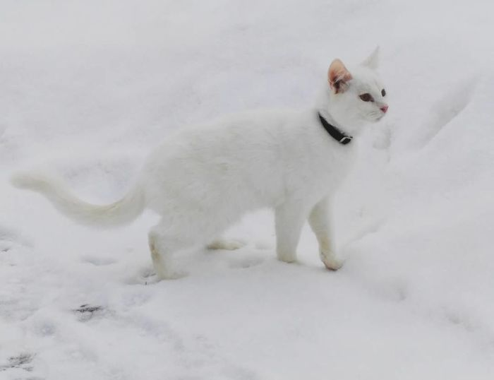 Animals Cats I Love My Cats  My Cats Beautiful Animals  Beautiful Cat In My Garden Beautiful Nature