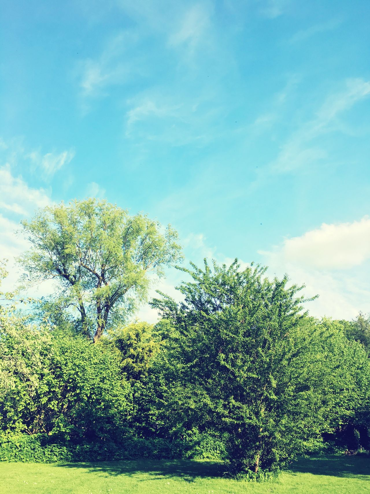 Tree Sky Growth Nature Day Cloud - Sky No People Beauty In Nature Tranquility Green Color Tranquil Scene Outdoors Scenics Low Angle View Landscape Plant Branch