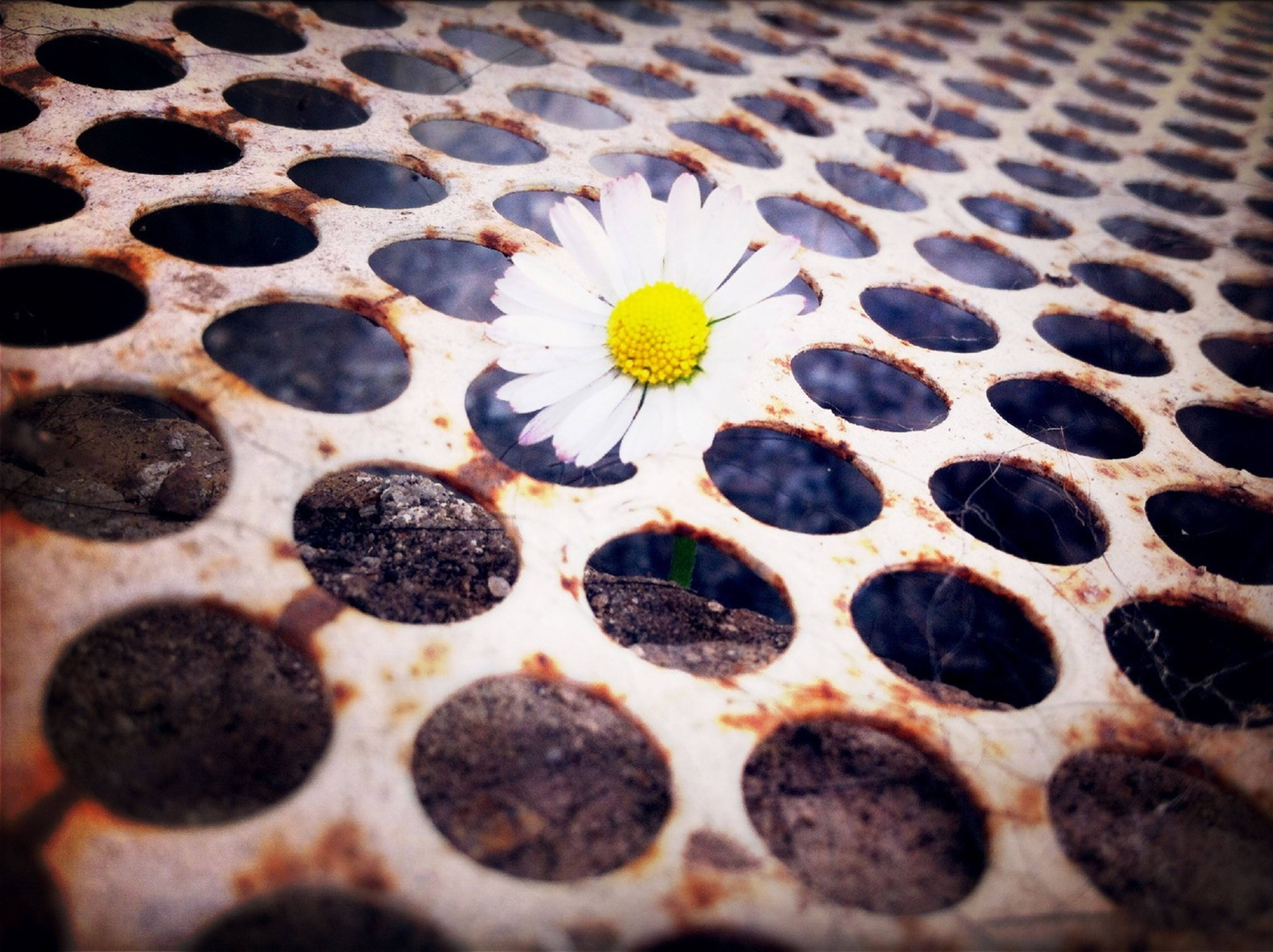 pattern, indoors, close-up, full frame, design, freshness, backgrounds, yellow, no people, textured, flower, selective focus, fragility, high angle view, spotted, day, white color, nature, petal