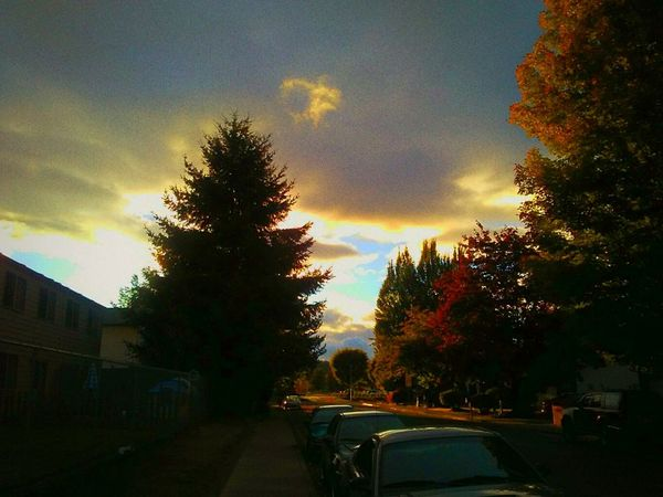 Amazingevening Beautiful Sunset Tree Sky Cloud - Sky Outdoors The Way Forward No People Doing What I Love To Do Cellphone Photography The Color Of Technology Shine On ✨ Brilliant Colour Tranquil Scene Twilighttime Dramatic Sunset Stormy Clouds Blue Sky Peaking Through Oregon Beauty Oregon Sunset Oregon Unlimited What A Sight Perfection❤❤❤ Portrait Illuminated