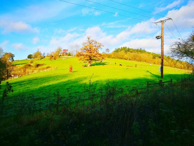 Field Agriculture Cloud - Sky Grass Nature No People Outdoors Landscape Rural Scene Sky Beauty In Nature Day Tree Oak Tree In A Field Alpacas Fields And Sky Grass Slope Mammal Scenics House On A Hill Freshness Animal Themes Beauty In Nature Grass Nature