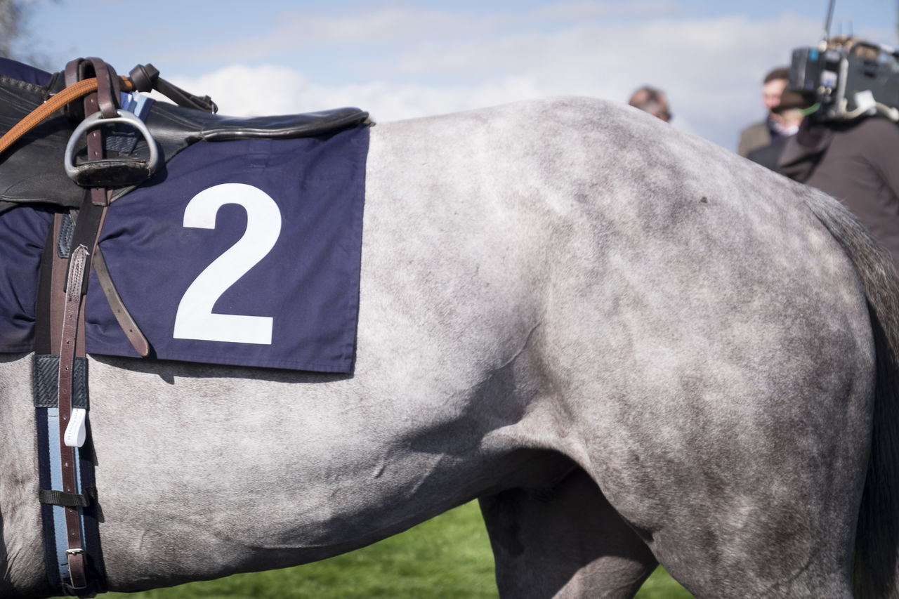 Grey race horse 2 Animal Flank Grey Grey Horse Horse Horse Race Horse Races Horse Racing Number One Animal Race Horse Saddle Stirrup