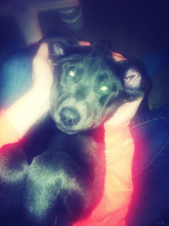 My Puppy :)
