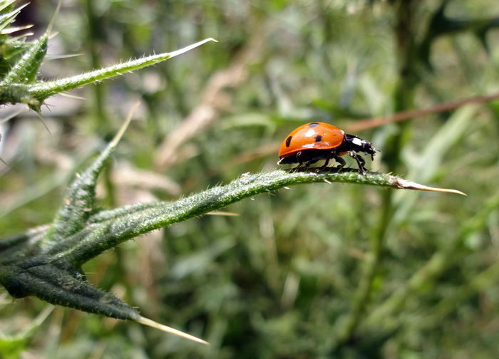 Kletterkünstler Animal Themes Beauty In Nature Climbing Artist Close-up Day Focus On Foreground Green Color Ladybird Nature Outdoors Selective Focus Wildlife