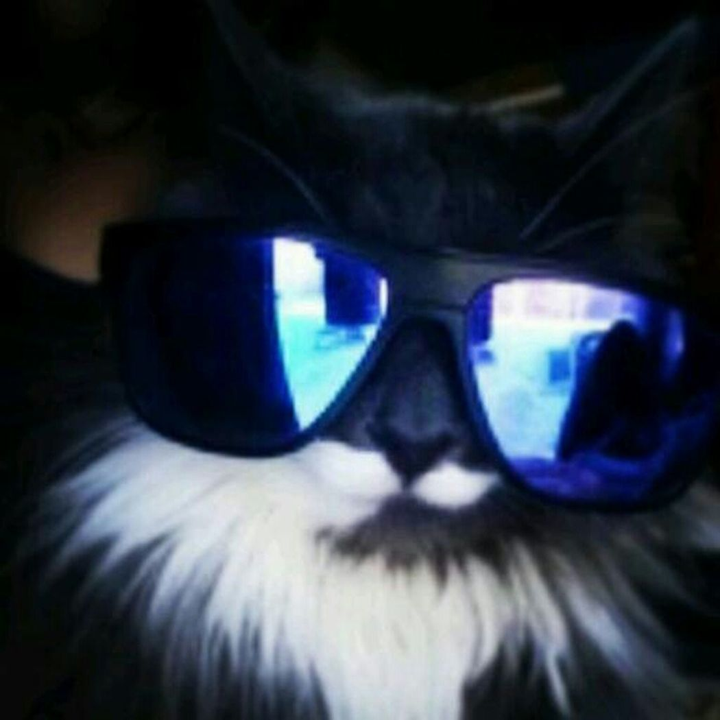 Mr. Boots looking bout it (RIP) Hello World Check This Out You're So Cool