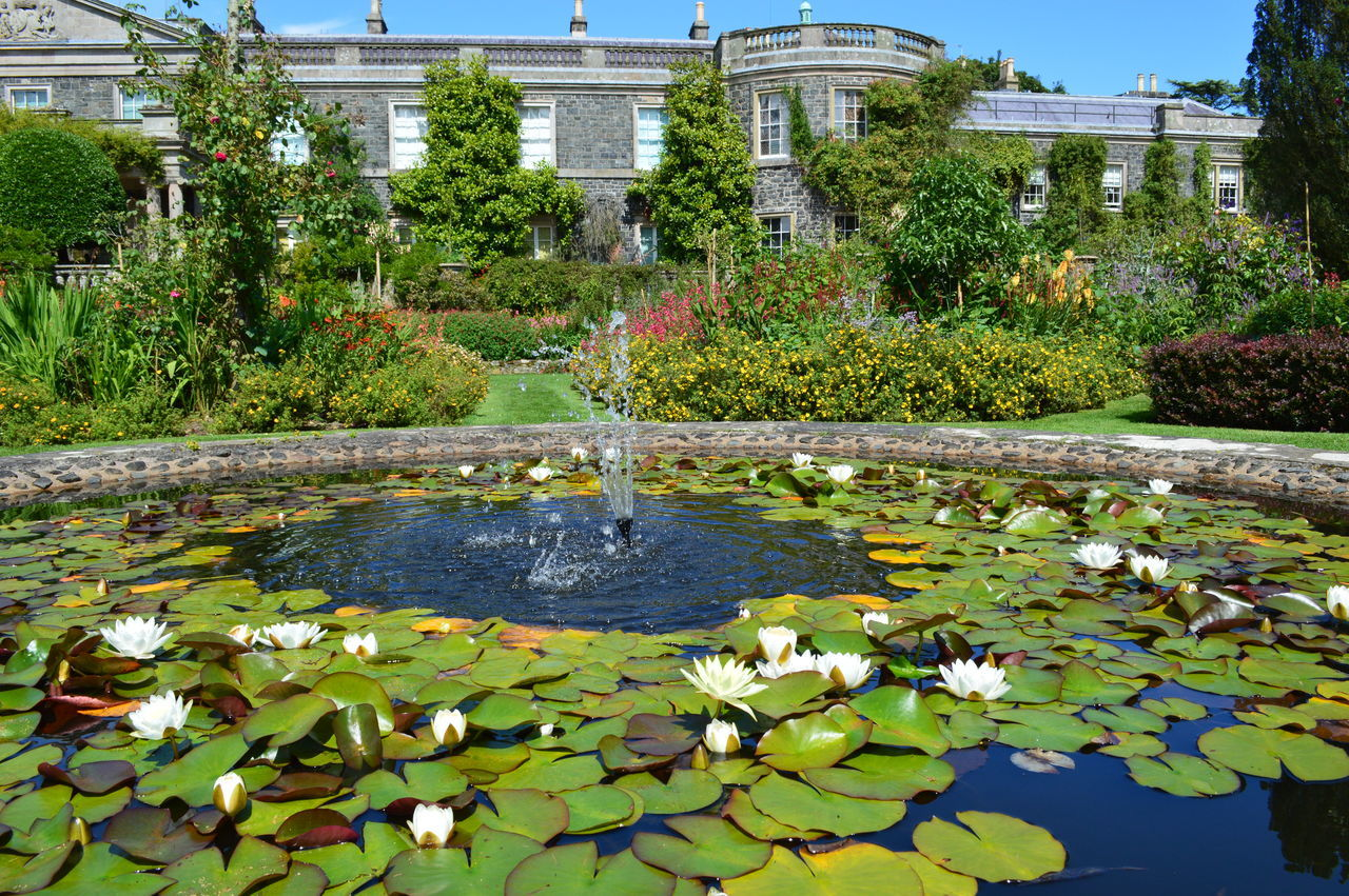 Formal Garden Garden Summer Northern Ireland Formal Gardens Mount Stewart Mount Stewart Gardens Mount Stewart National Trust Old Country Pile Ornamental Garden Beautiful Garden Flowers,Plants & Garden Stately Home Outdoors Flowers Water Feature Ornamental Pond Lily Pond Water Lillies Lush Foliage
