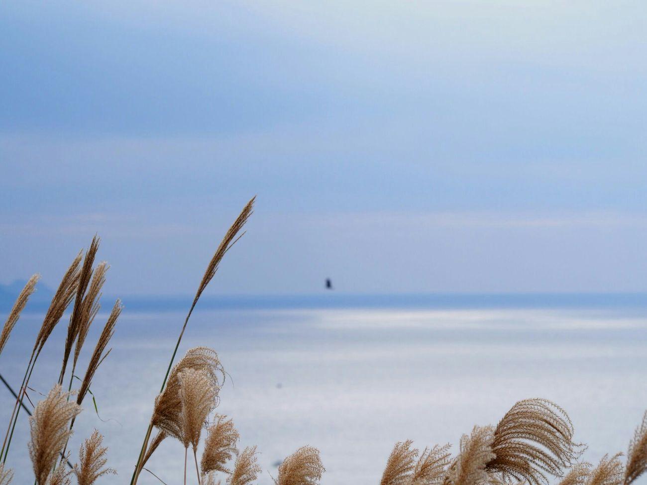おはようございます😊 秋の海は静で穏やかで…冬の海は静でさみしい…Winter 空 海 Sky Sea Sea View 好きな場所 たそがれ Natural Sky_collection Sea_collection Eye Em Nature Lover EyeEm Best Shots EyeEm Gallery