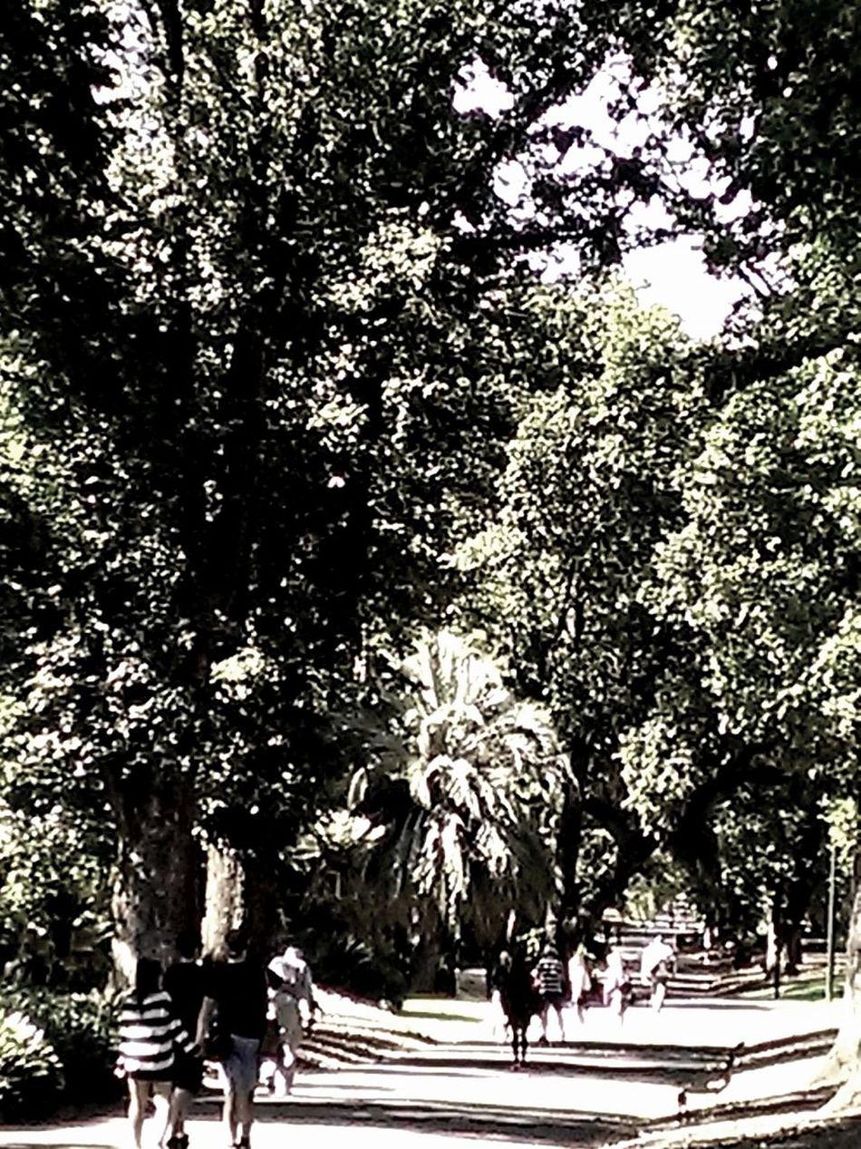 People Watching Treasury Gardens Htc8x Walking Around Afternoon