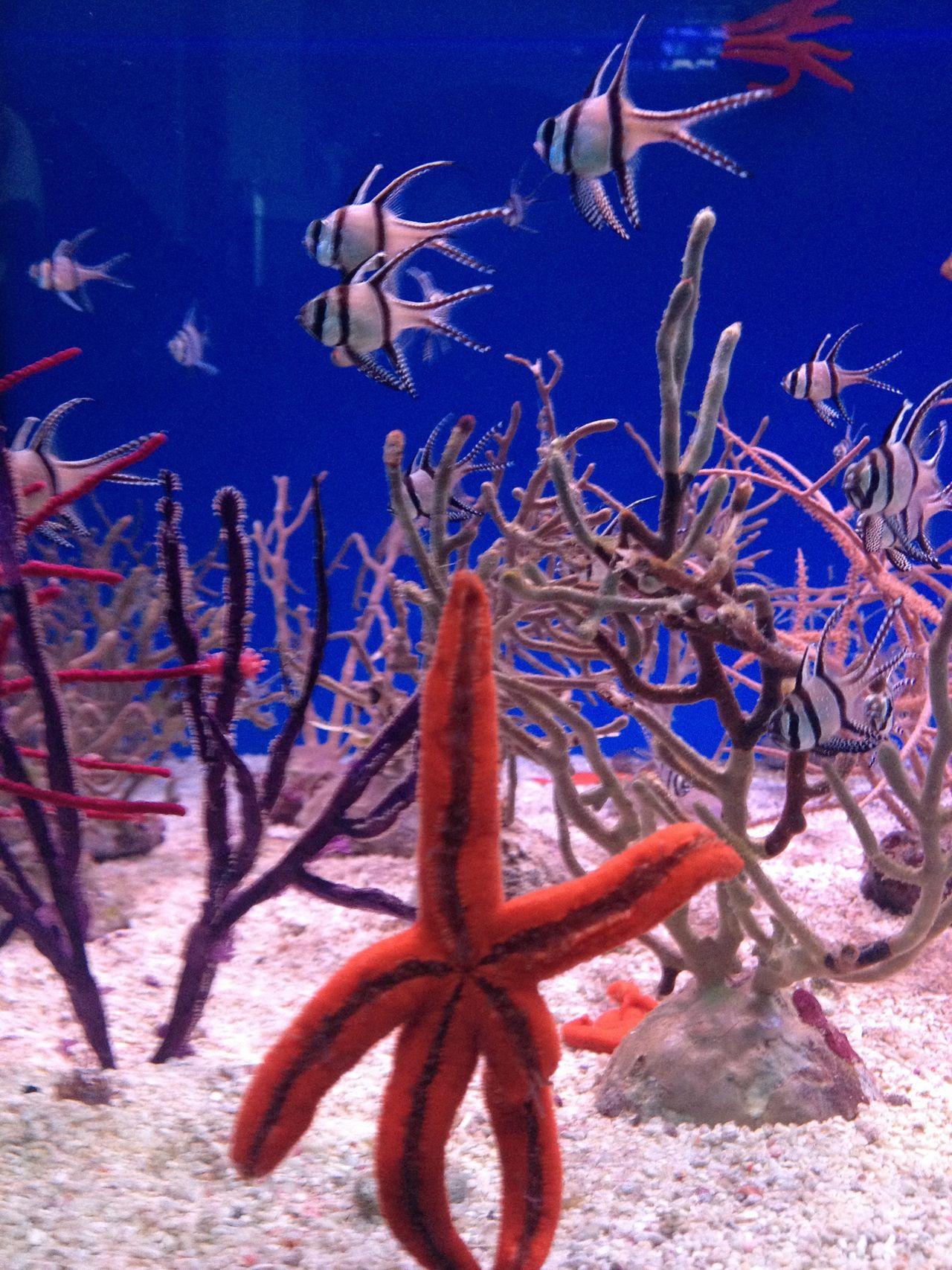 Aquarium Aquarium Life Close-up Fish Hi Nature No People Say Hello Sea Star Star Underwater Nature's Diversities