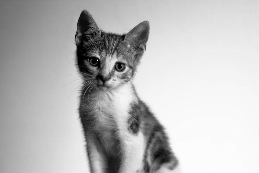 Kitty cat! Cheese! Pets Pet Animals Animal Portrait Blackandwhite Black & White Cute Cats Cute Cutness Furry Furry Friends Beautiful Love Adorable Cat Kitty Kitten Kittens Kitty Cat Kitty Love