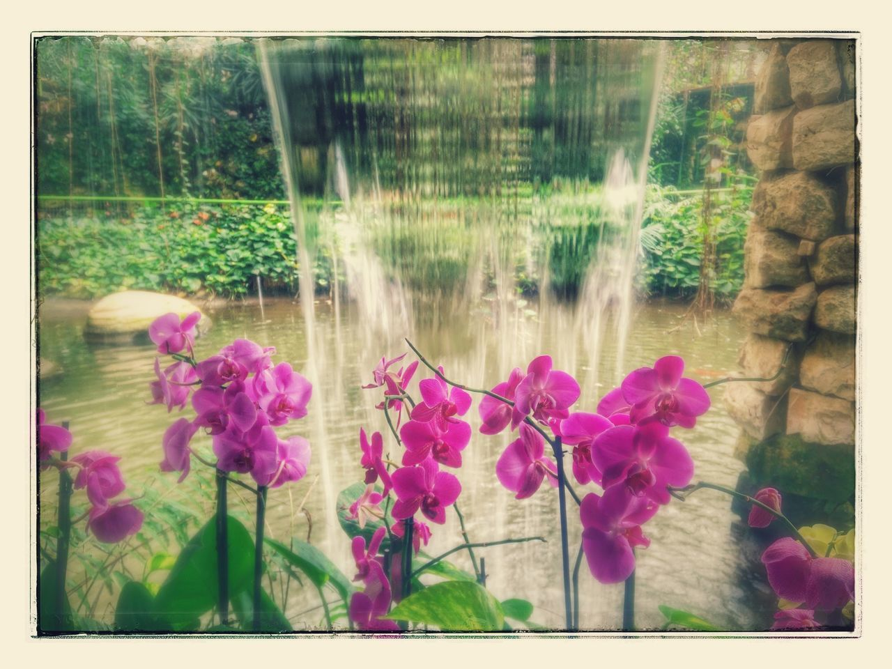 Orchids Garden Orchid Purple Orchid Waterfall Flowers Indoor Garden Indoor Gardening Indoor Garden Pool Orchid Blossoms Orchidea Tranquil Scene