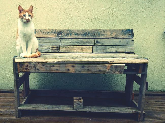 Domestic Animals Animal Themes One Animal Pets Cat Mammal Domestic Cat Architecture No People Bench Seat Wood Wooden Recycling Recycle Cats Cats Of EyeEm Newtalent Newtalentthisweek NewToEyeEm NewTalenFest