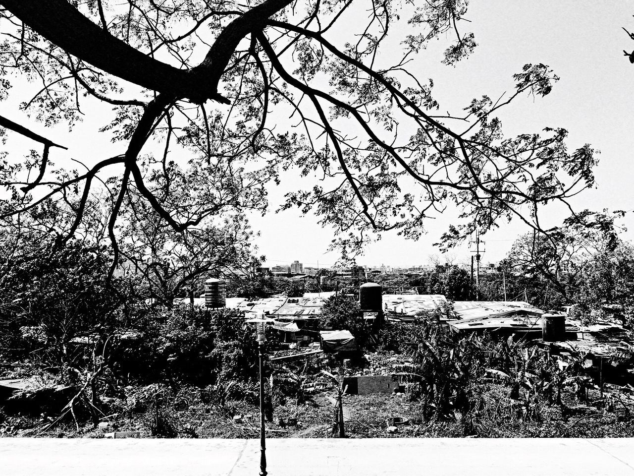 Chinaberry。 EyeEm Gallery EyeEm Best Shots - Black + White The Tourist Taking Photos Hello World Everything In Its Place How Do We Build The World? TOWNSCAPE Tree Flower Enjoying Life Nature Photography Nature_collection Sanxia