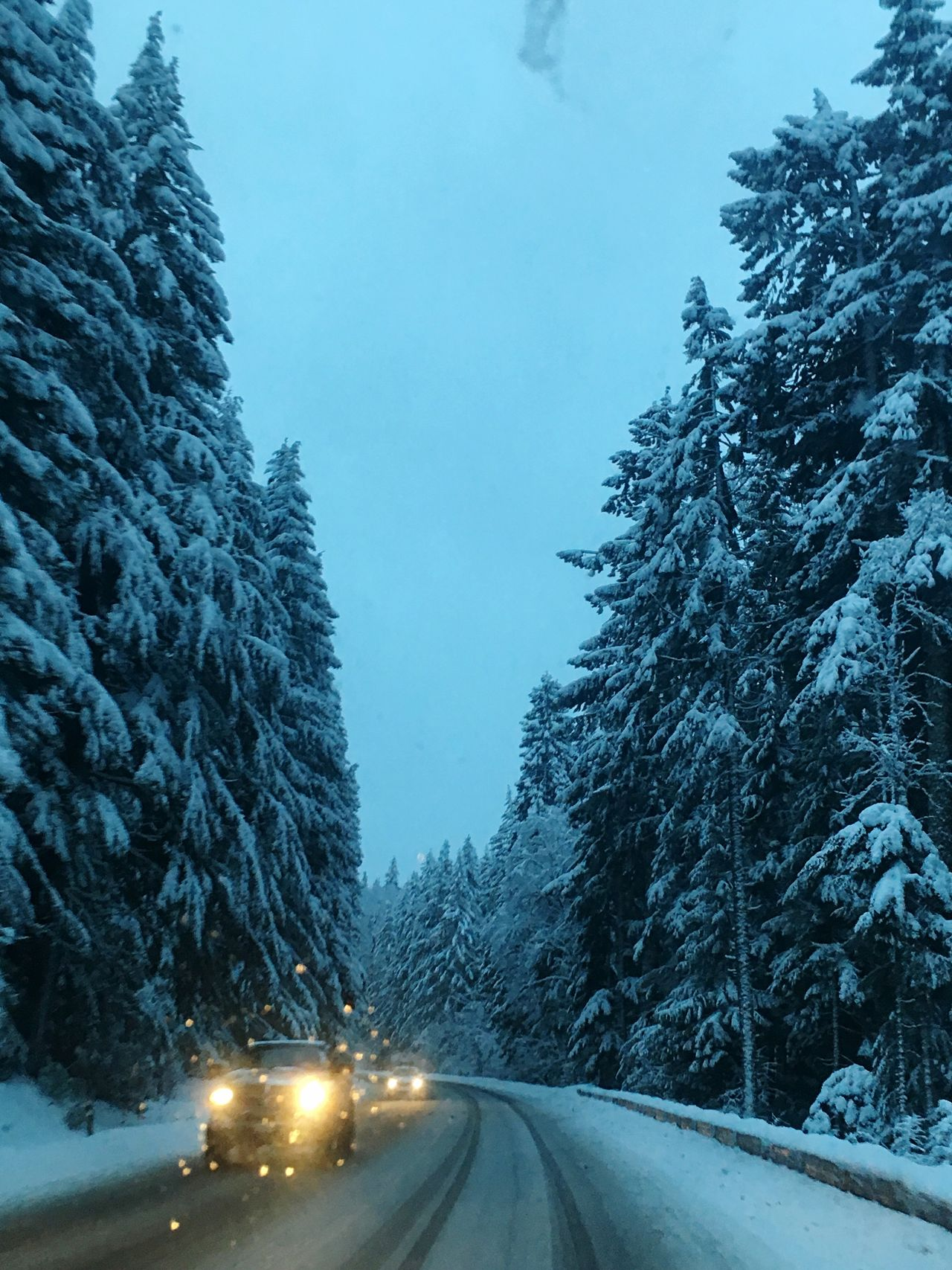 Traveling Home For The Holidays Transportation Tree Road Car Cold Temperature Snow Winter Weather Land Vehicle Nature Mode Of Transport No People Beauty In Nature Scenics Outdoors Day Sky