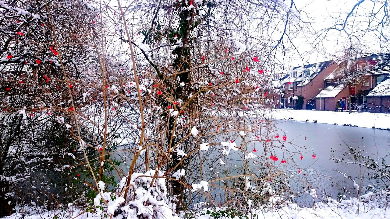 snow, winter, cold temperature, tree, branch, nature, bare tree, outdoors, built structure, no people, day, building exterior, architecture, beauty in nature, sky, snowing