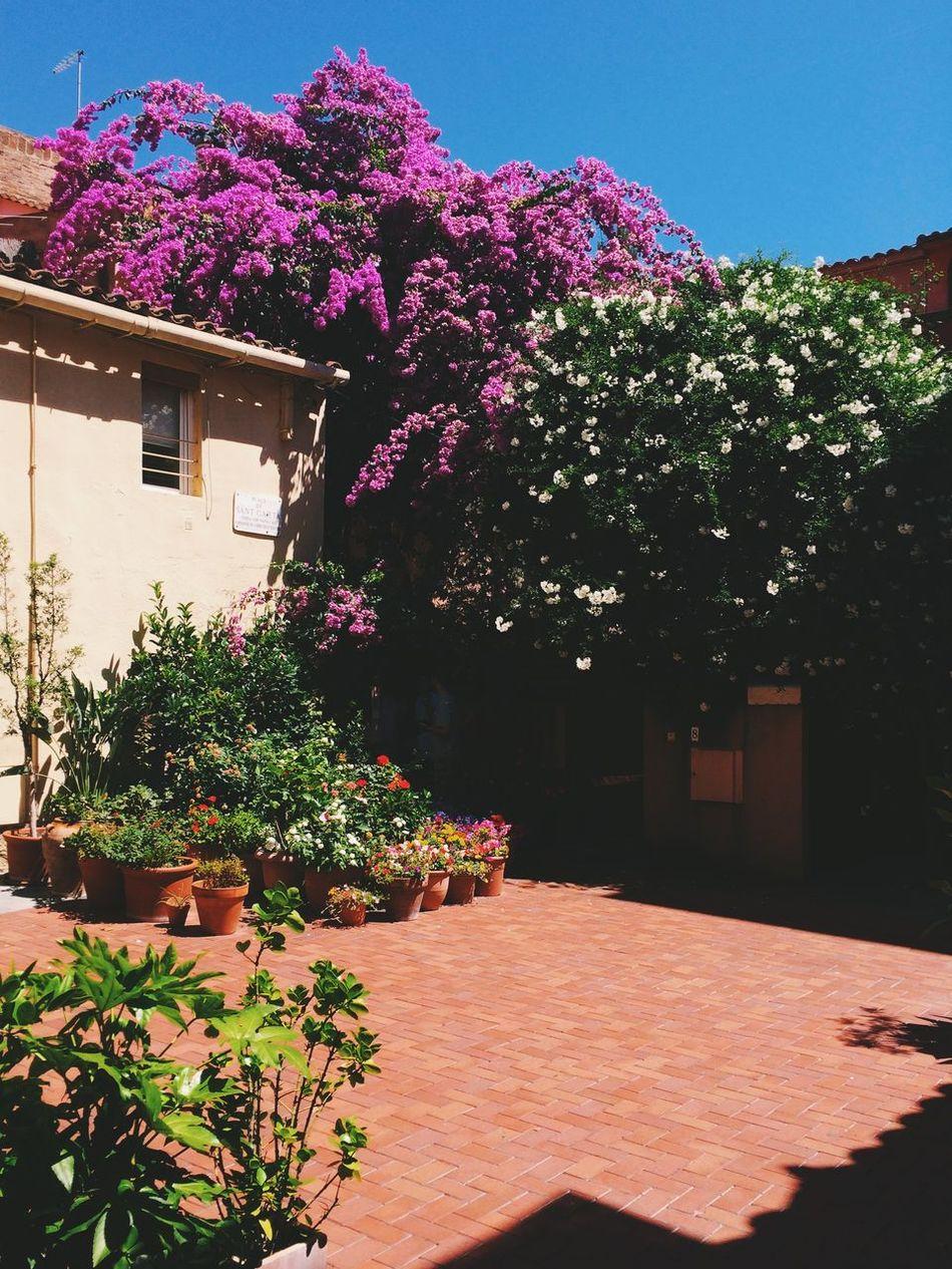 Nature On Your Doorstep Sarria. Barcelona Flowers Patio