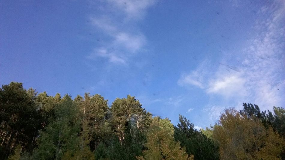 Because of dirty window.. Mountain Road On The Road ılgaz The Purist (no Edit, No Filter) Sky And Clouds Nature Photography Trees