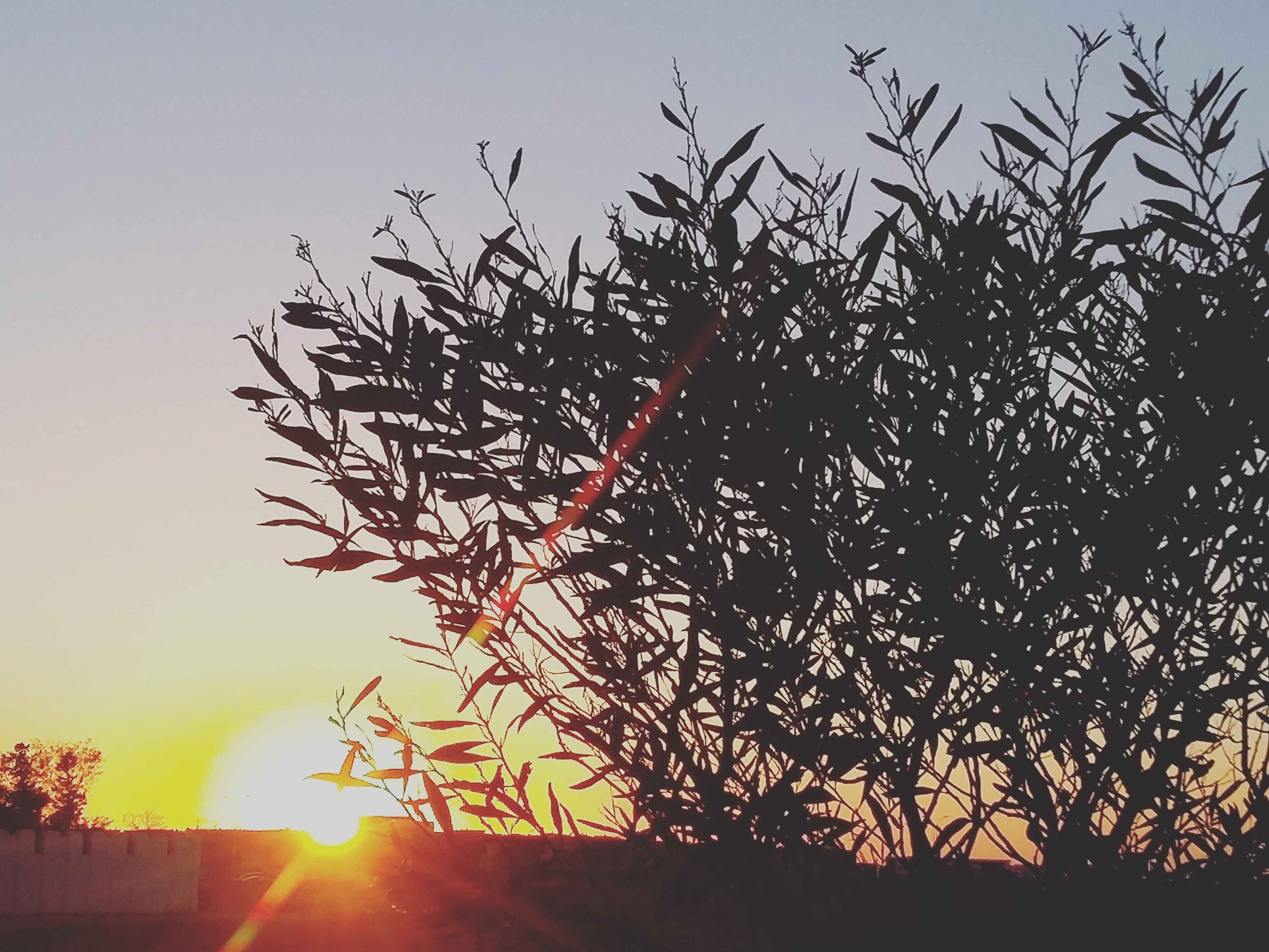 nature, sunset, tree, growth, beauty in nature, no people, silhouette, sky, outdoors, day