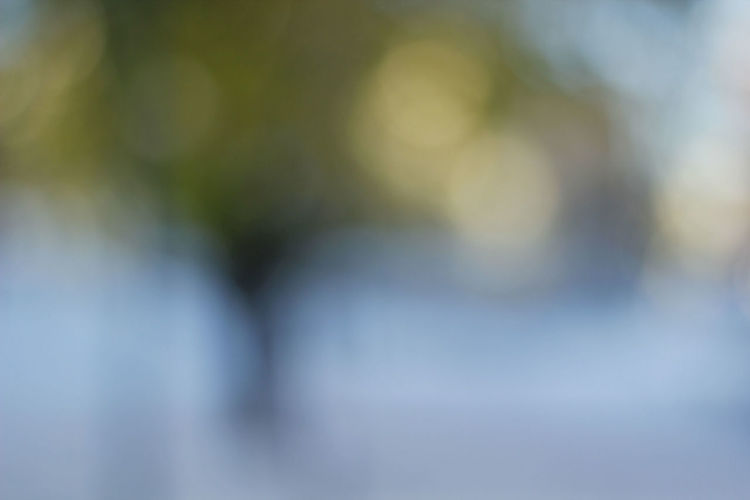 Abstact Tree Abstract Abstract Photography Defocused Nature No People Outdoors Wintertime